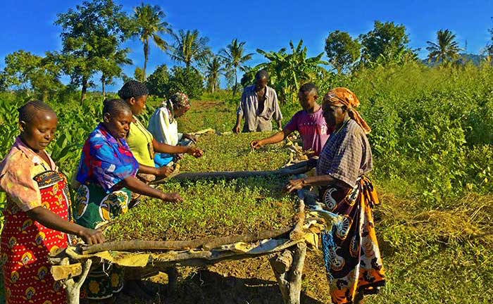 Taking Smallholder Farmers Commercial, Step by Step