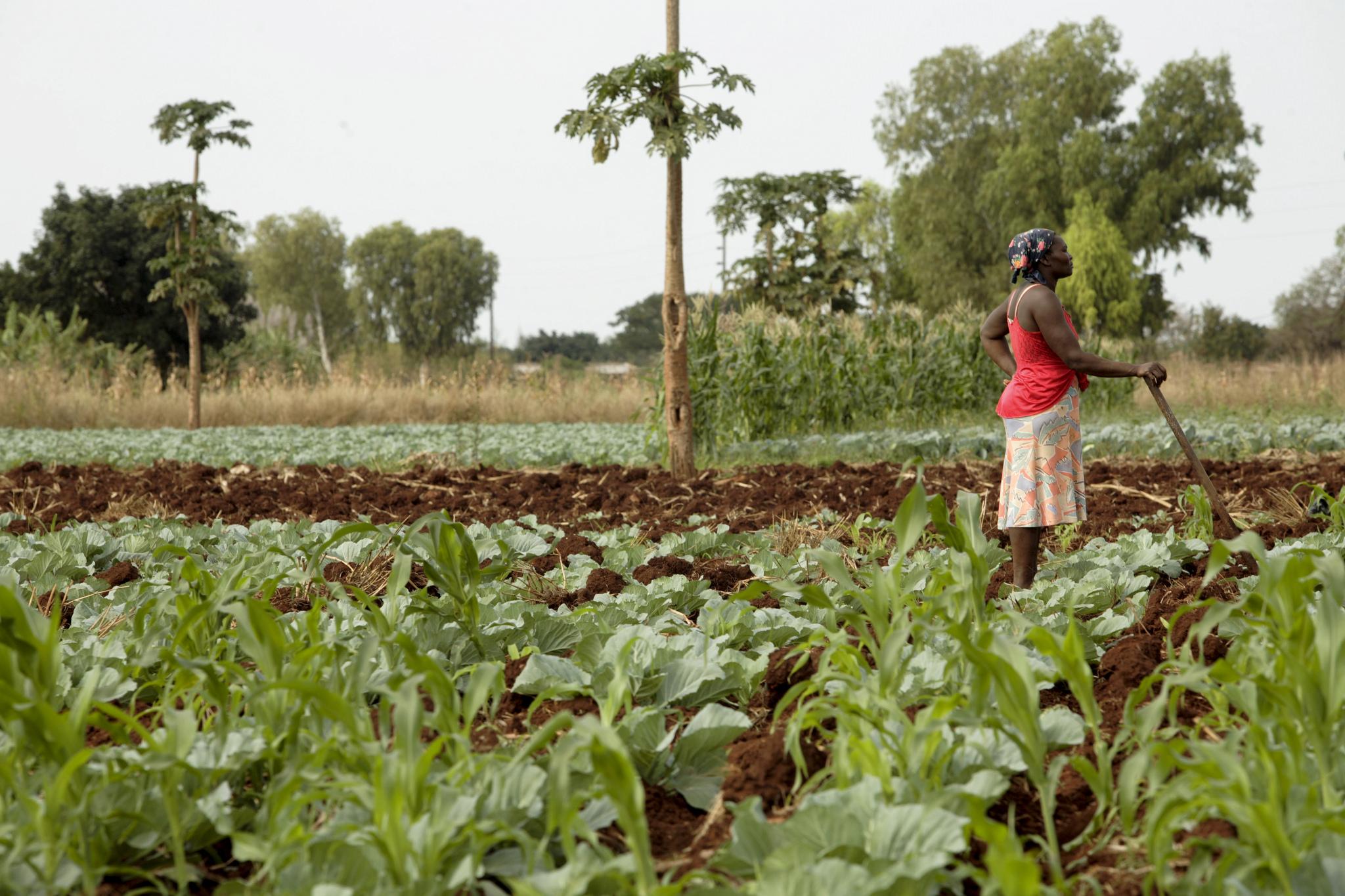 Funding the Sustainable Development Goals