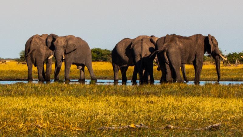 China's Historic Ivory Ban