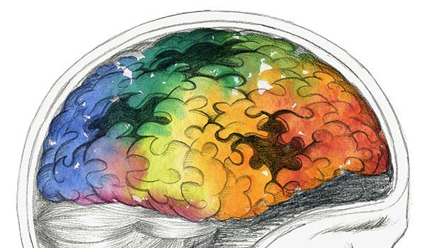 human brain puzzle pieces