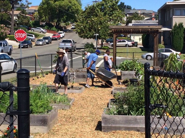 Bearing the Fruits (and Vegetables) of Community