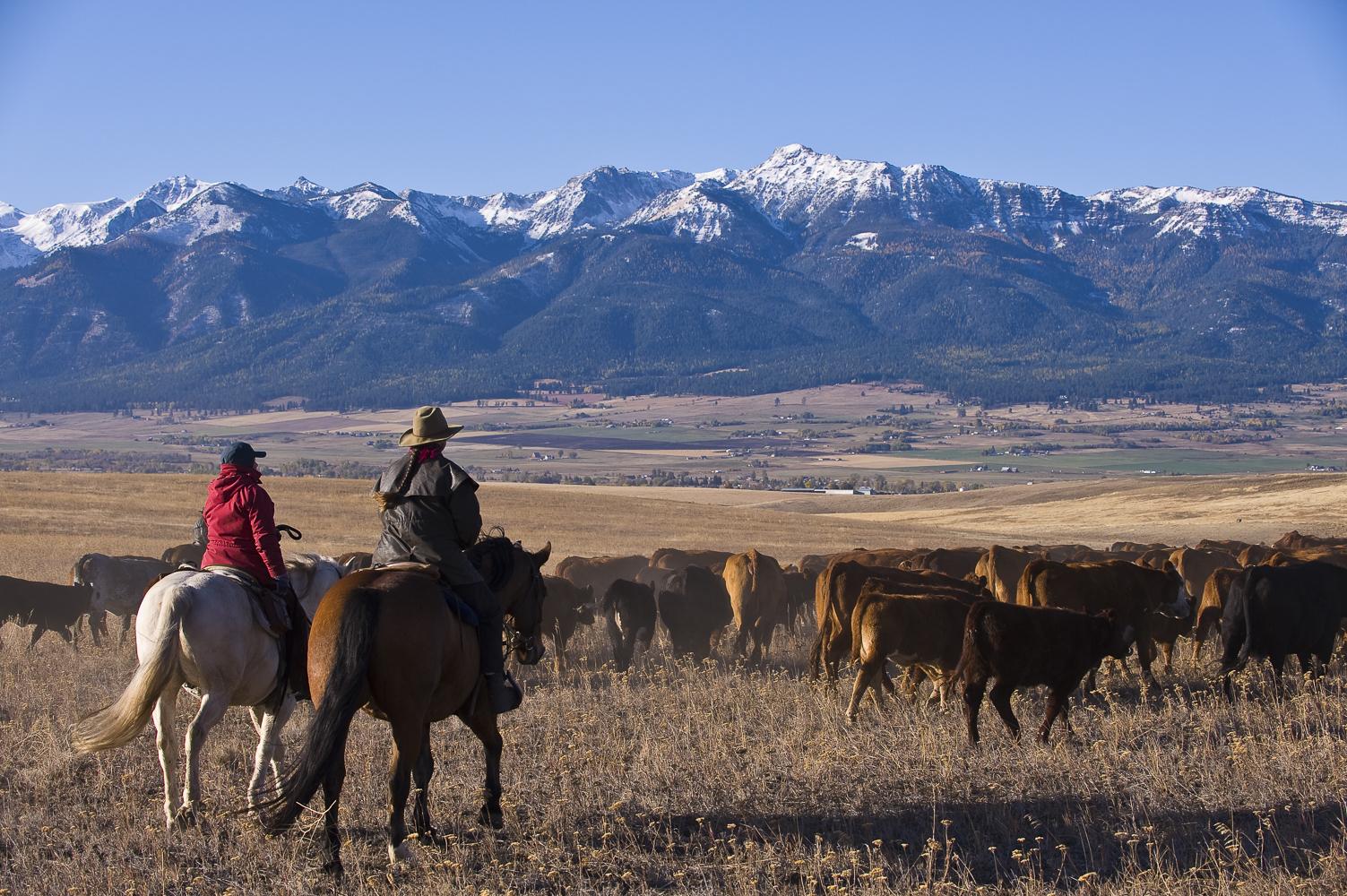 Tension as Catalyst: Land Stewardship