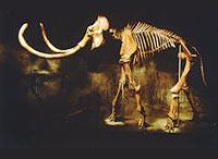 Must Extinction be Forever?