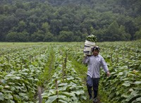 The Immigrant Workforce: Challenges, Opportunities, and the Future of our Economy