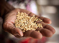 Finally, A Sustainable Way to Fight Malnutrition